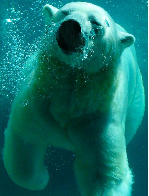 Ysbeer